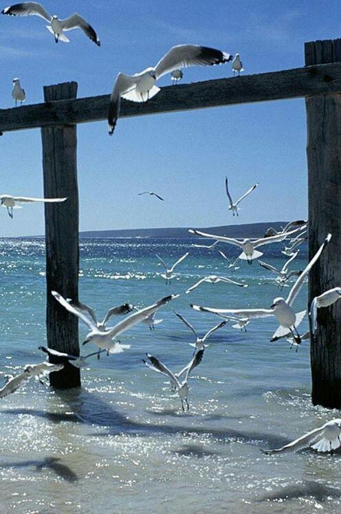 """Gallerie fotografiche : """"Finestra sul mare""""   F2fcce10"""