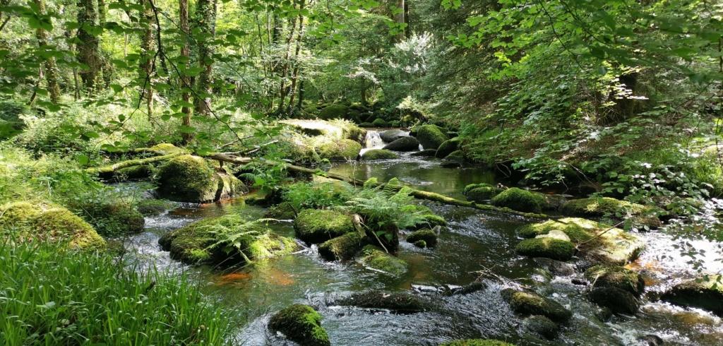 Parc naturel Img_2035