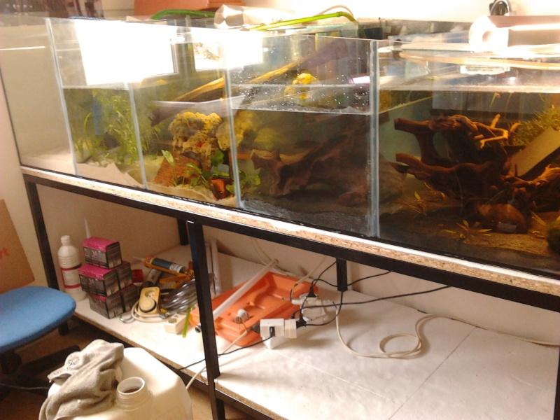 Fish-dodo-room  Photo112