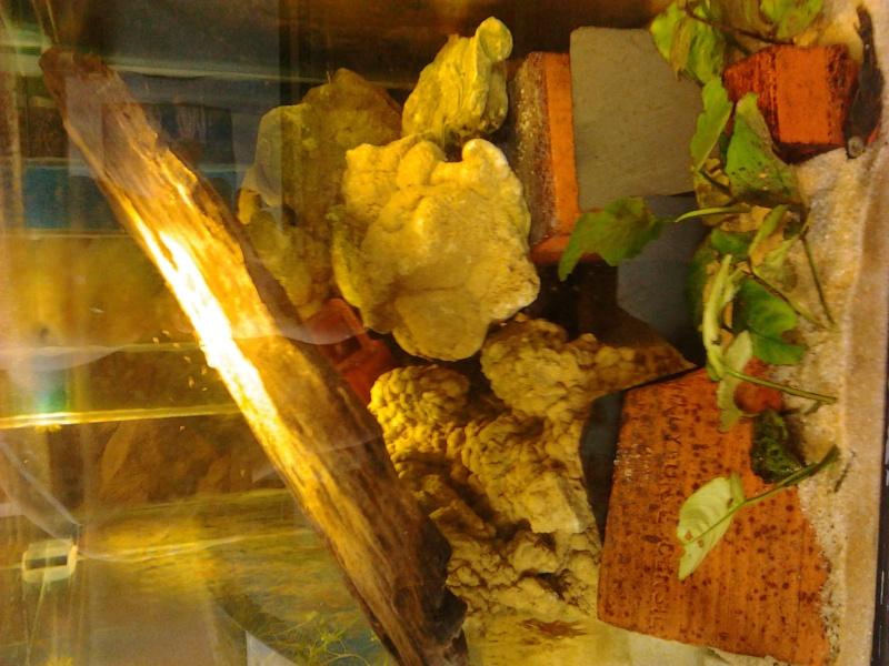 Fish-dodo-room  Photo113