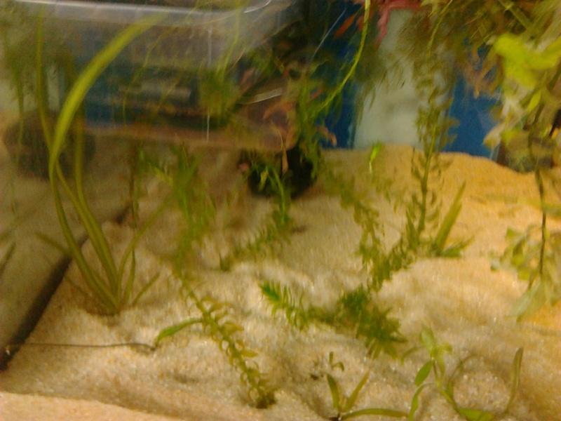 Fish-dodo-room  Photo116