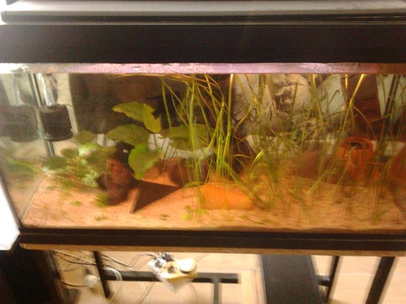 Fish-dodo-room  Photo117