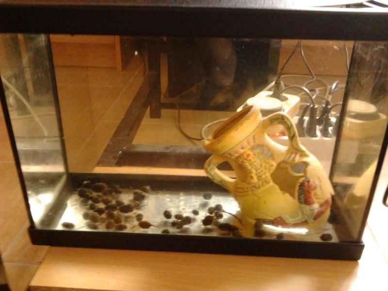Fish-dodo-room  Photo118