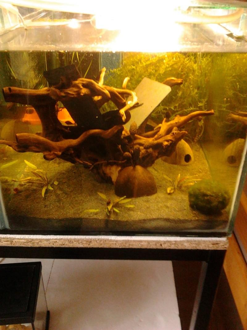 Fish-dodo-room  Photo119