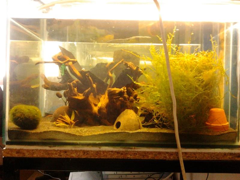 Fish-dodo-room  Photo121