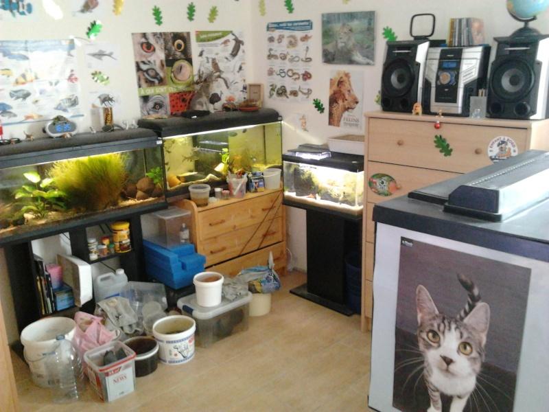Fish-dodo-room  Photo125