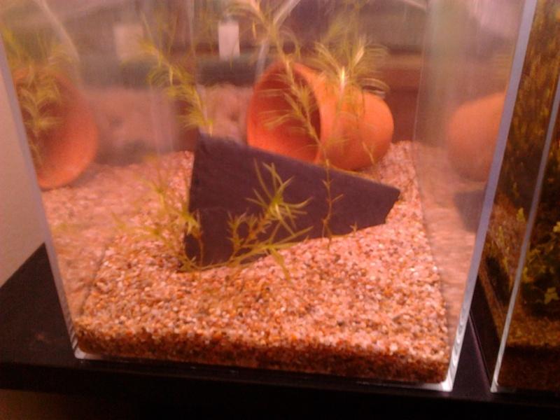 Fish-dodo-room  Photo217