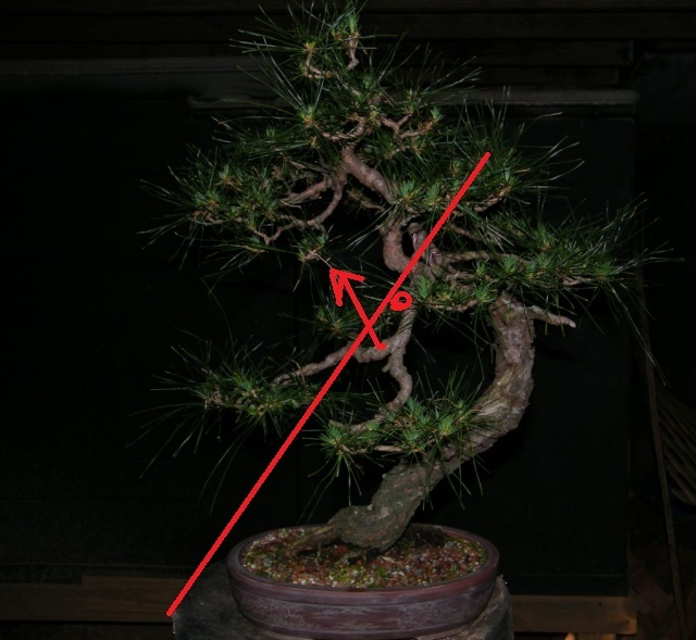 Japanese Red Pine - Page 2 Rp_ver10