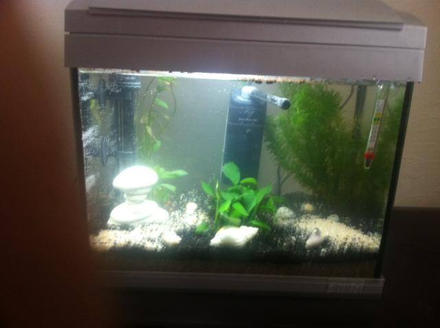 1er aquarium (20L) Img_0311