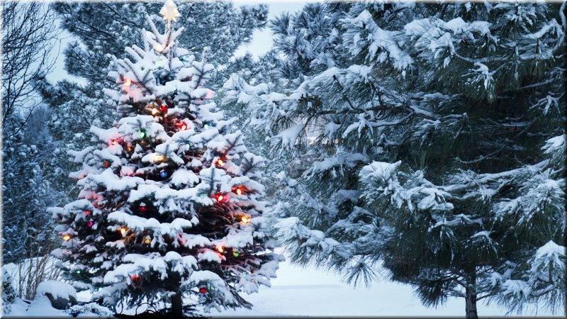 un KAWA en TERRASSE - Noel 2020  Noel10