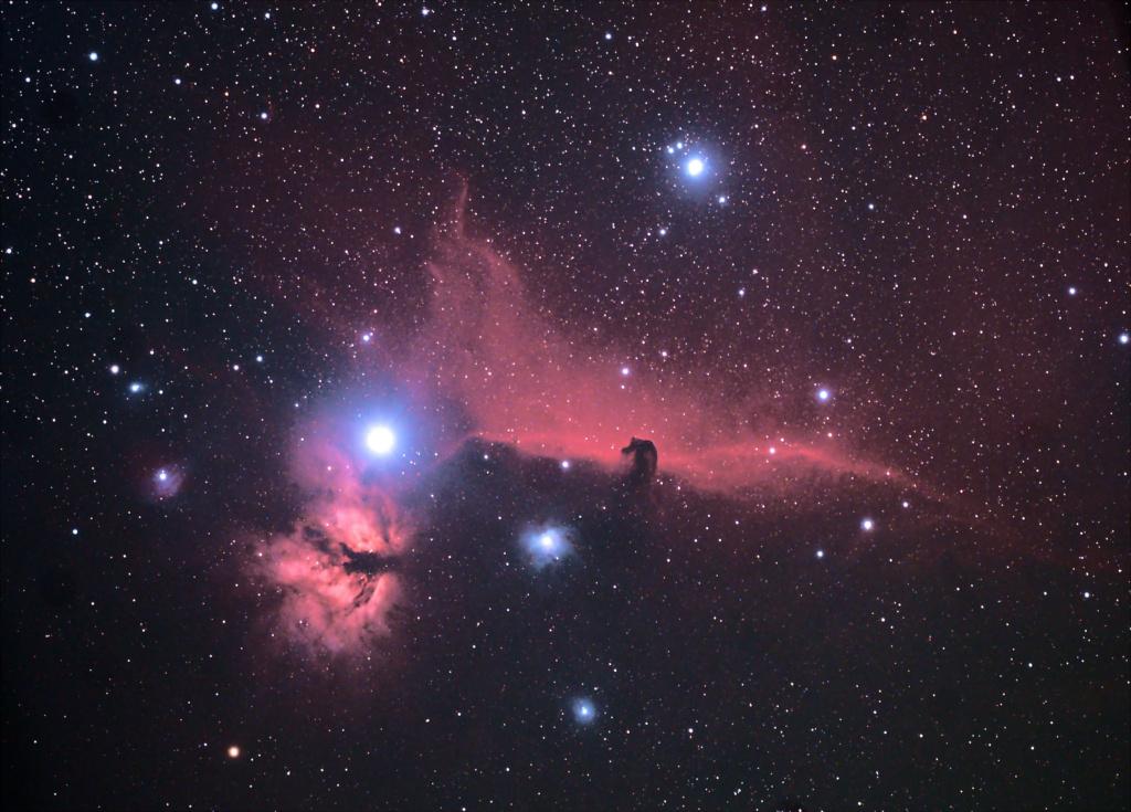 Dada brabançon Orion210