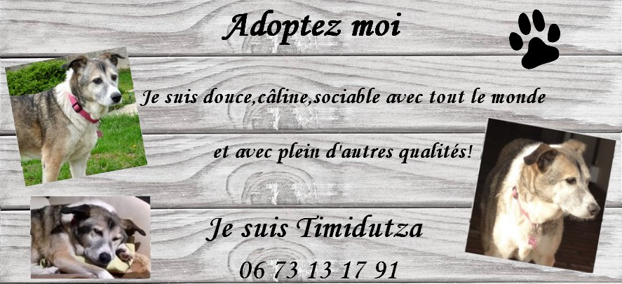 weekend adoption des 9/10 décembre 2017 - Page 4 82917110
