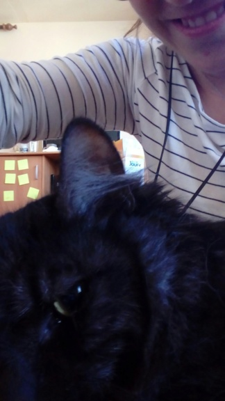 LAWSON, chat européen black smoke poils mi-longs, né en juin 2016 20180912