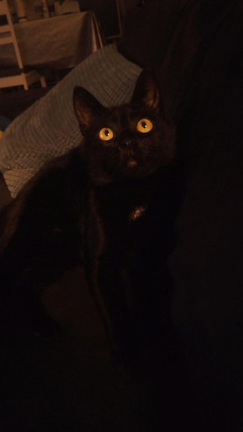 Néji, chaton noir, né le 30/05/17 49115010