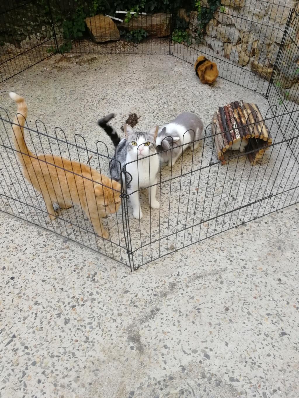 Noun - chaton gris et blanc - né en mai 2017 Img_2030