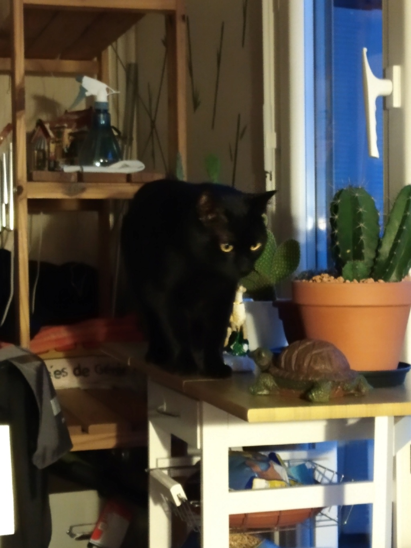 LYNN, chatte noire née en 2015 Img_2065