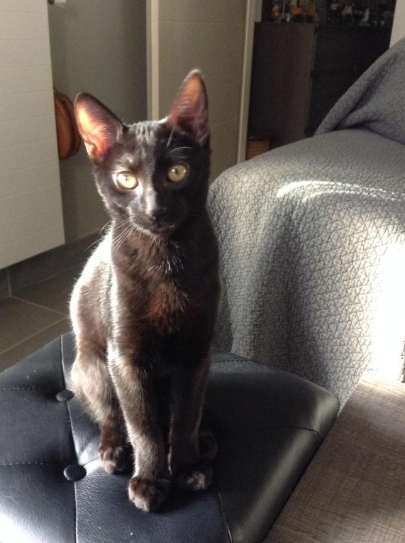 ORIZON, chaton noir, est né le 11 juin 2018 Img_2910