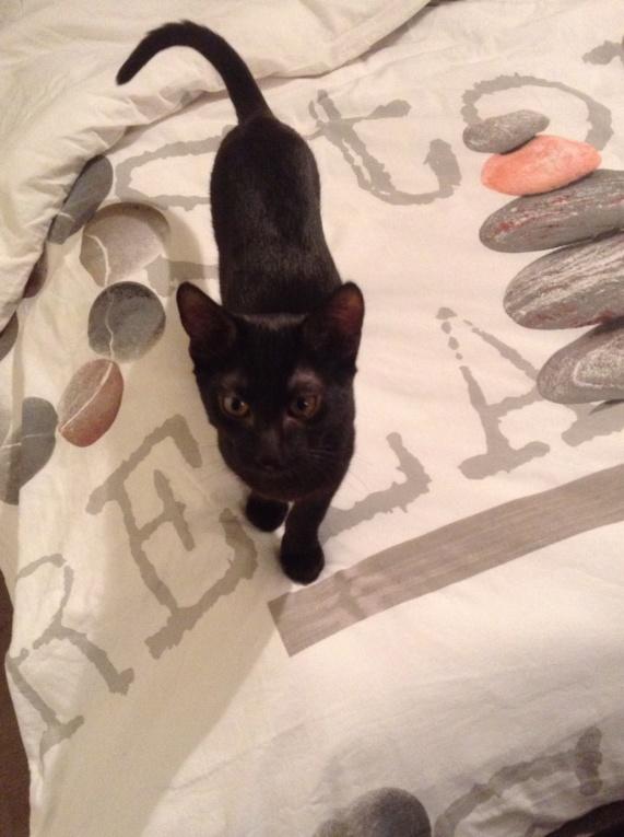 ORIZON, chaton noir, est né le 11 juin 2018 Img_2912