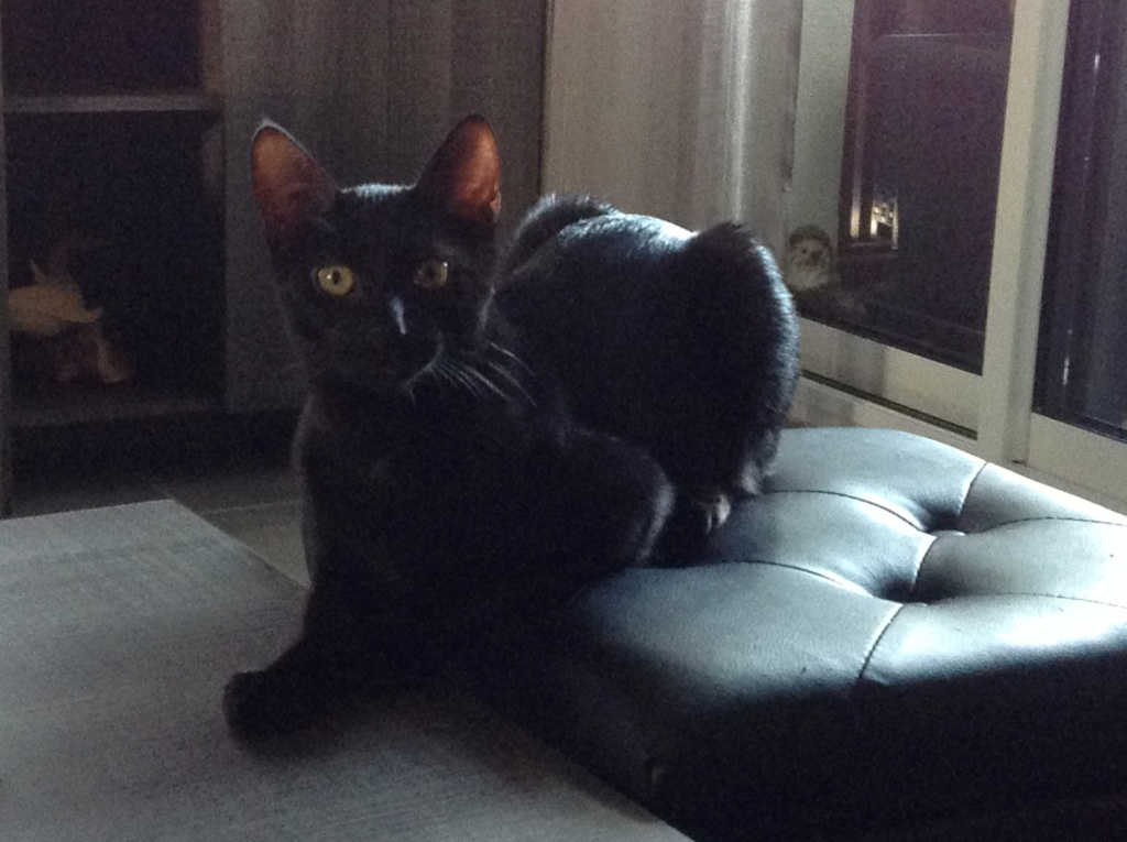 ORIZON, chaton noir, est né le 11 juin 2018 Img_3110