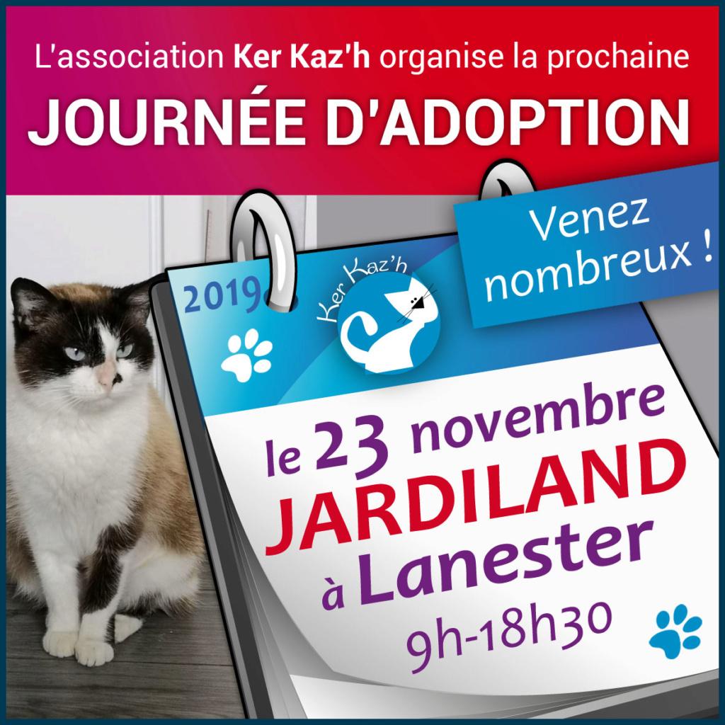 Forum adoption chats: Kerkaz'h Le Village des Chats - Portail Jakk-212