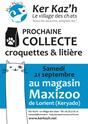 PEPIN, mâle européen tigré crème né le 15/08/2019 Affich15
