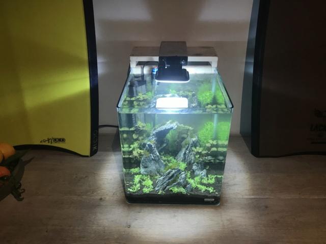Premier bac Nano cube 30L Caisso10