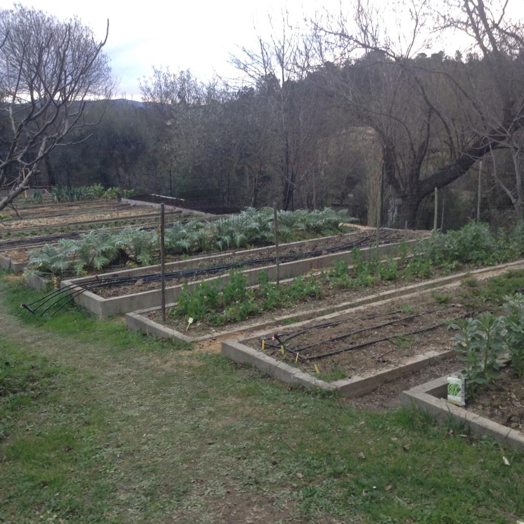 "Jardinage en permaculture ""lasagnes"" Image259"