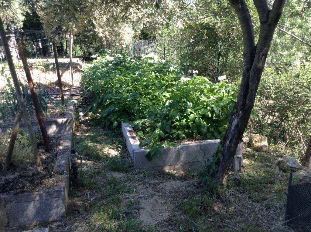 "Jardinage en permaculture ""lasagnes"" Image287"