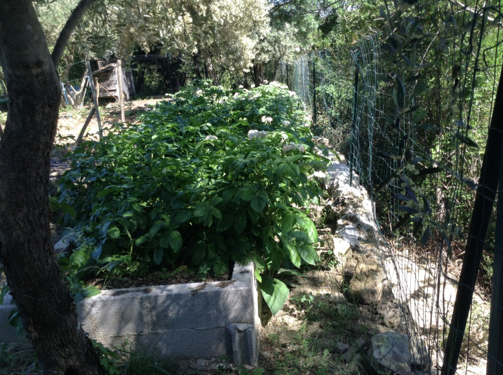 "Jardinage en permaculture ""lasagnes"" Image288"