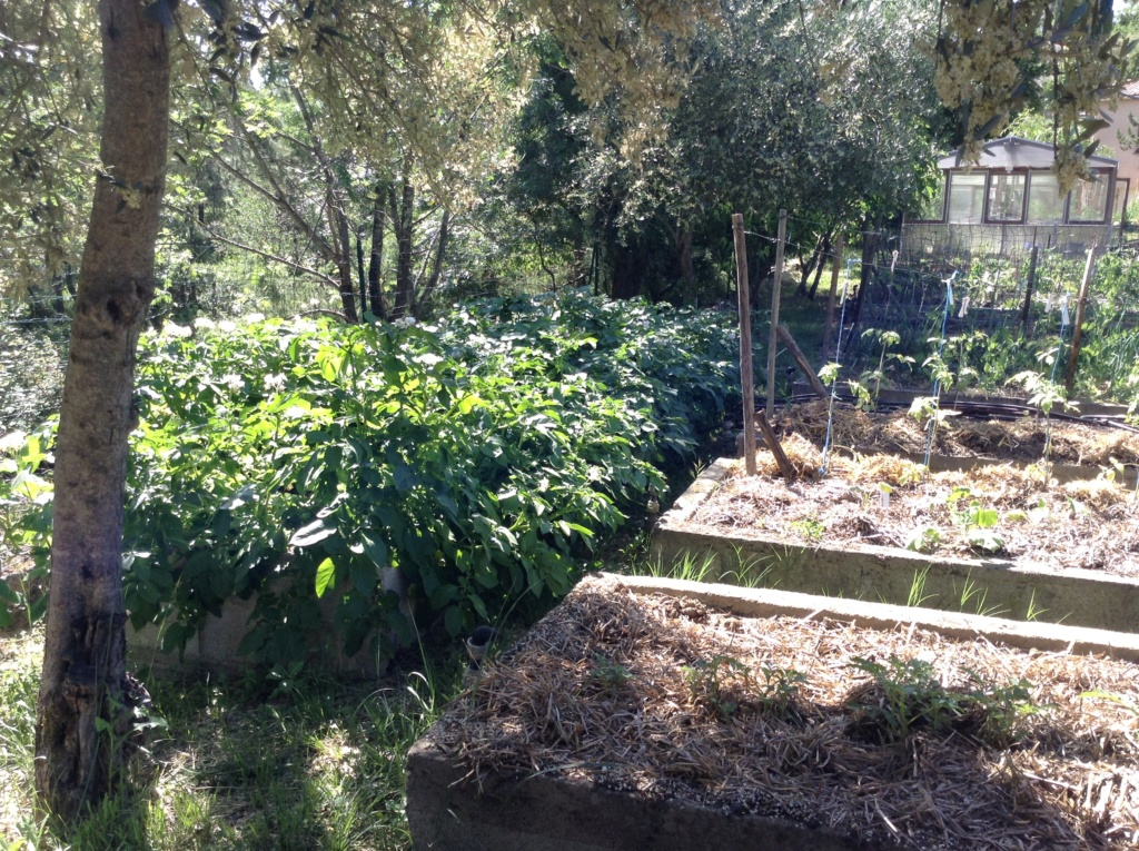 "Jardinage en permaculture ""lasagnes"" Image289"