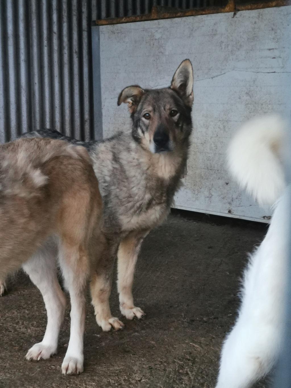 LUPI - femelle , née environ en 2010, typée chien loup de sarloos, taille moyenne - REMEMBER ME LAND - Page 3 Img_2154