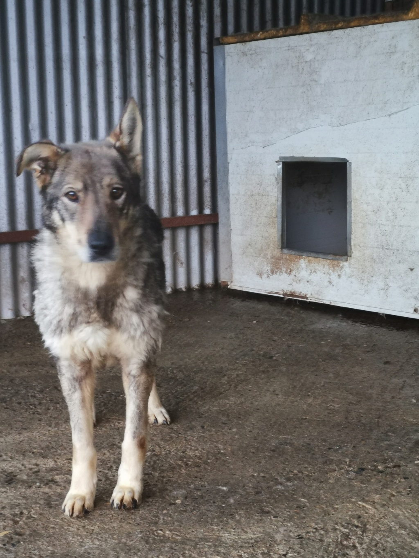 LUPI - femelle , née environ en 2010, typée chien loup de sarloos, taille moyenne - REMEMBER ME LAND - Page 3 Img_2156