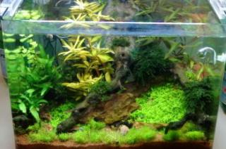 Aqua 60L, 4 guppys et 3 Mollys en RP Aqua_m11