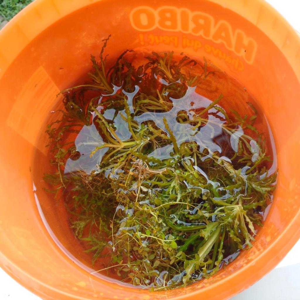 N°3 : un petit bac microfish Img_2118