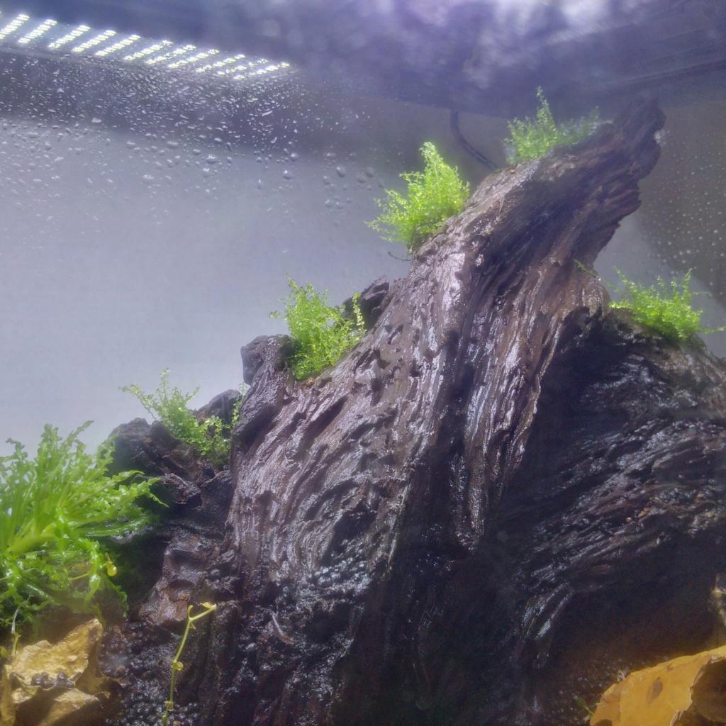 N°3 : un petit bac microfish Img_2123