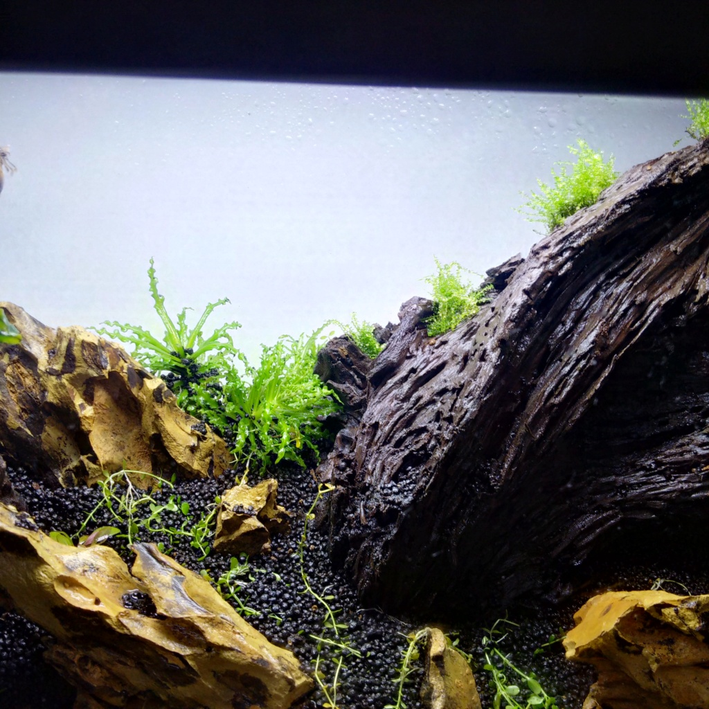 N°3 : un petit bac microfish Img_2127