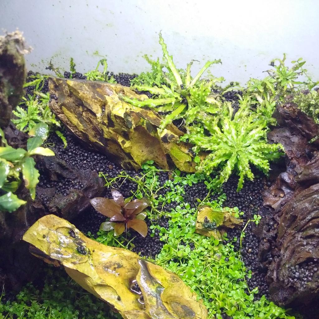 N°3 : un petit bac microfish - Page 2 Img_2142