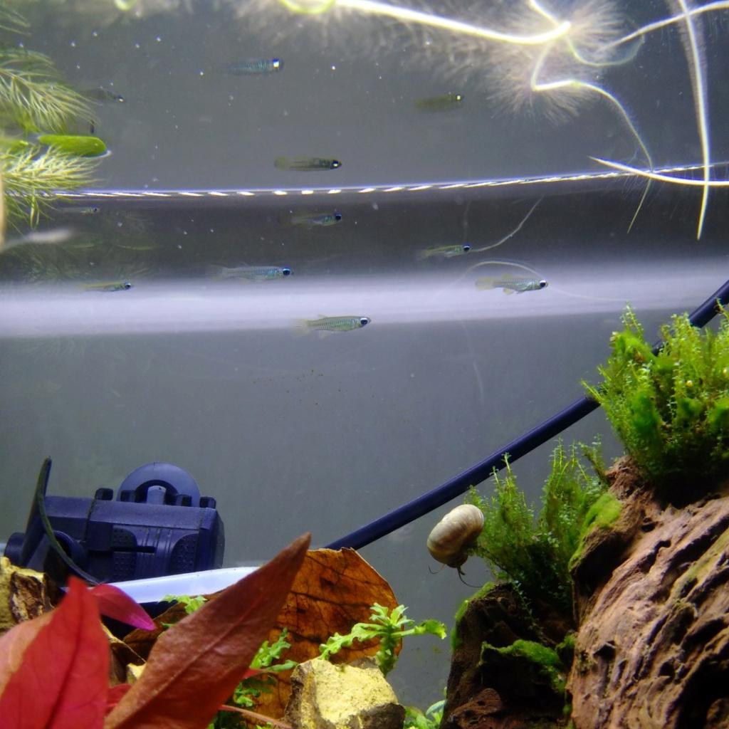 N°3 : un petit bac microfish - Page 3 Img_2146