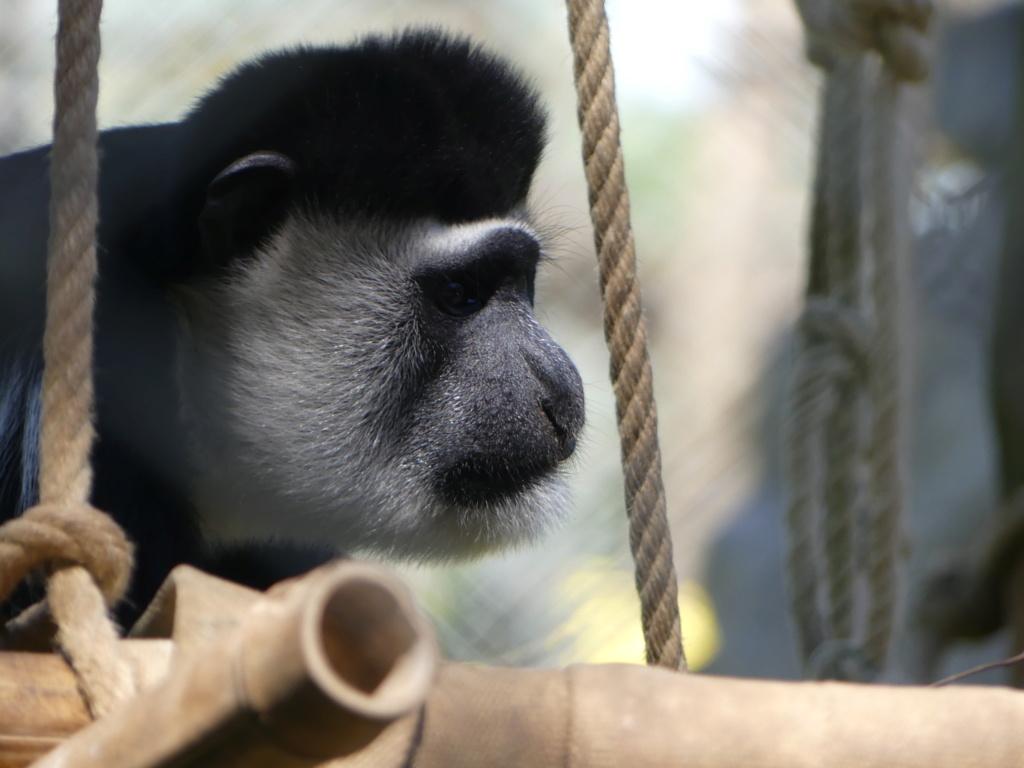 petit tour au Zoo  P1000610