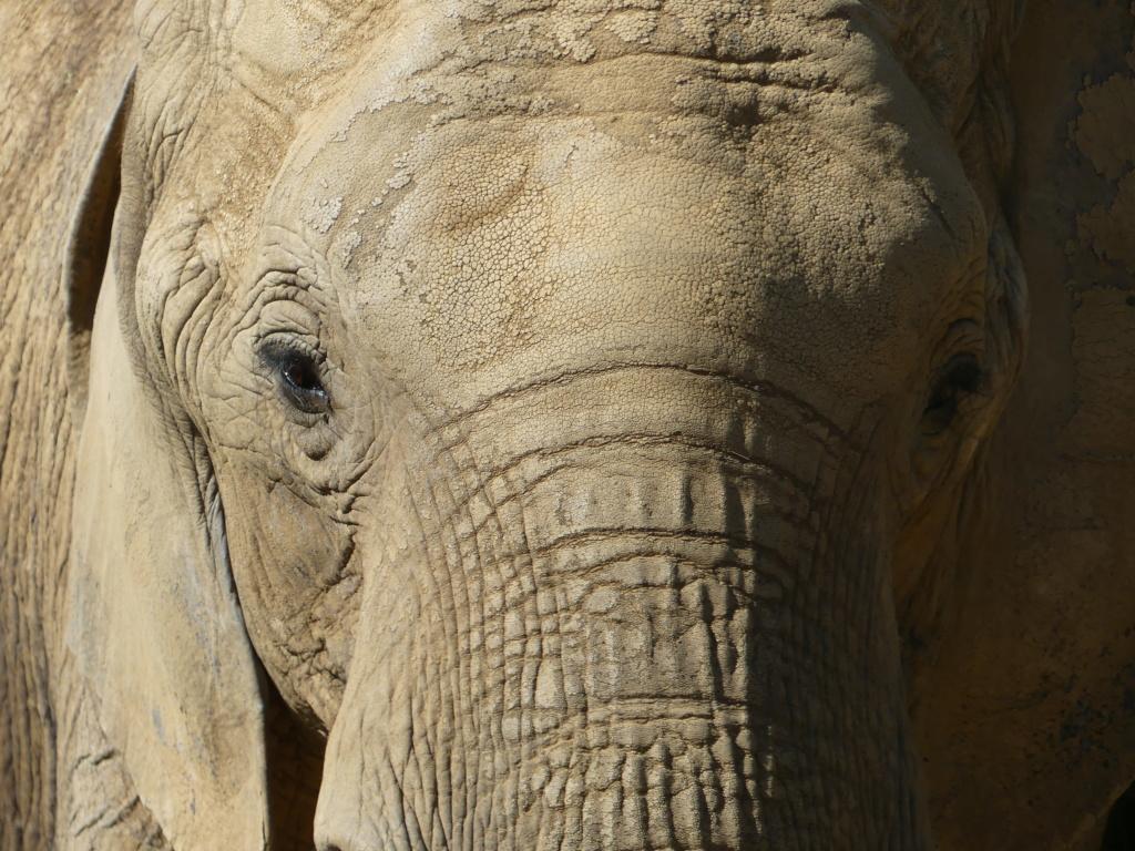 petit tour au Zoo  P1000810