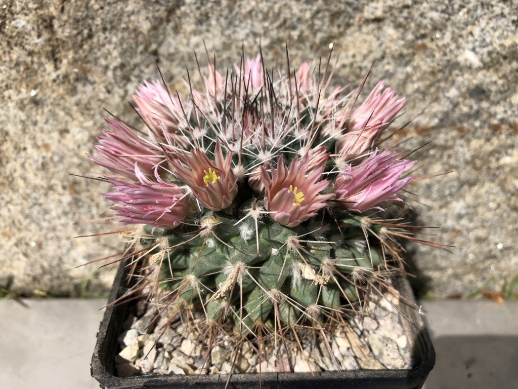 Flowers Spring 2019 20190510