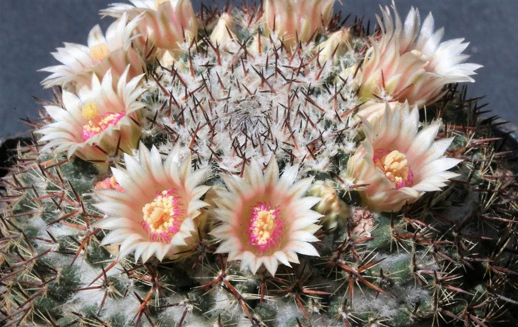 Flowers 2020 7_chio10