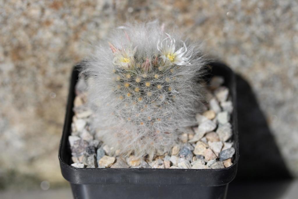 Flowers Spring 2019 Albi_p11