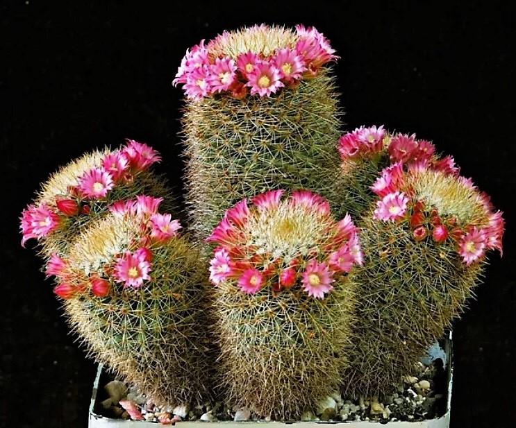 Flowers Spring 2019 Crassi10