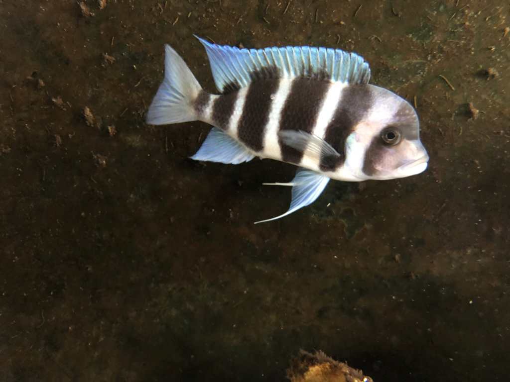 Mi acuario de Frontosas - Página 4 226d2010