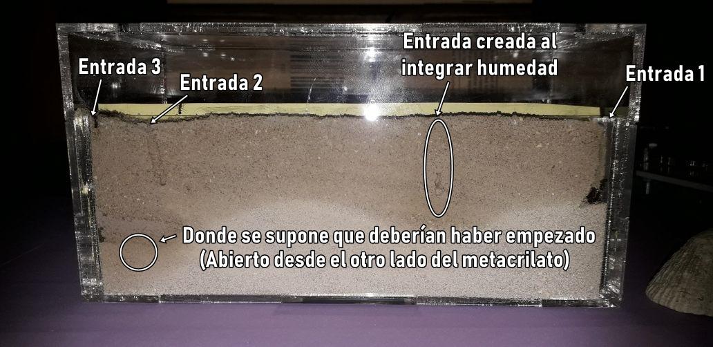Rincón Hormiga - Un Diario de Mirmecología - Página 2 15491510