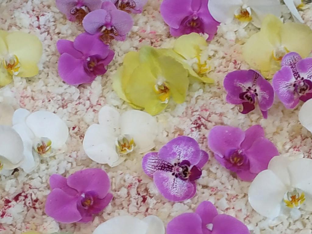 Floralies 2019 Img_2010