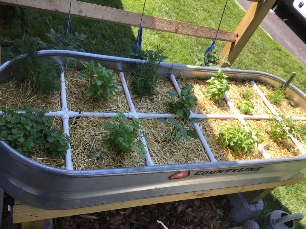 Miniature garden project. 4194df10