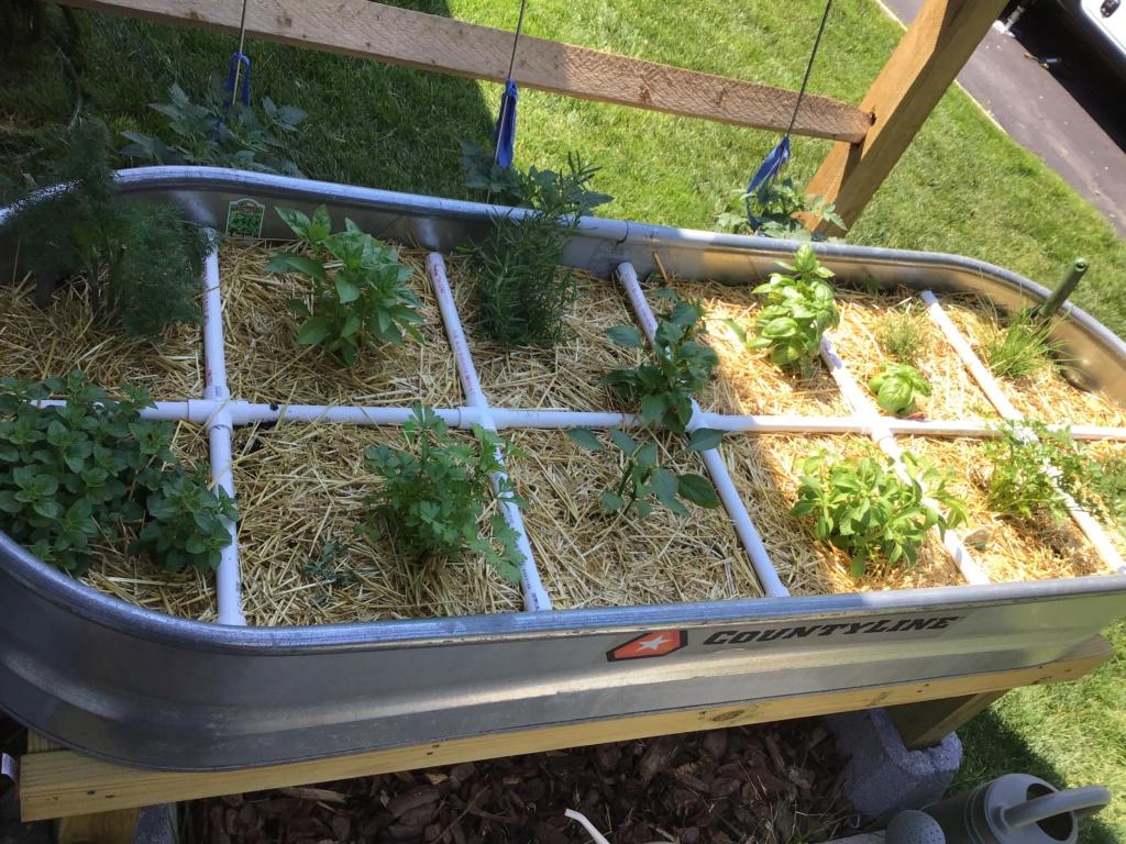 Miniature garden project. 5893c910