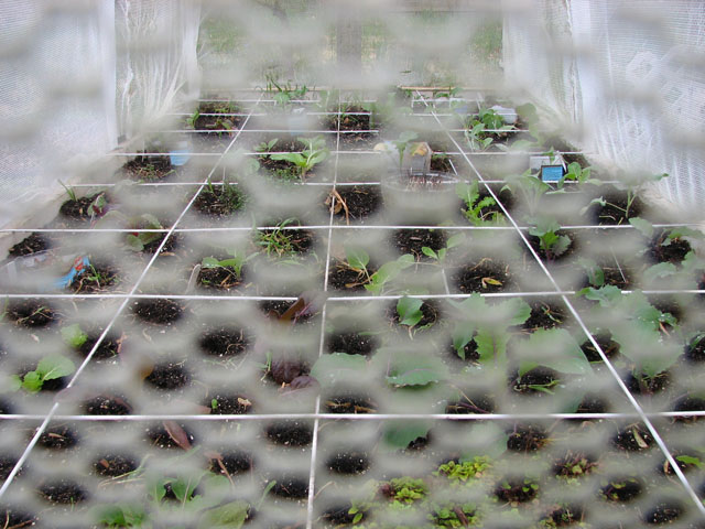 Bird Netting on Top of Enclosed Garden Nettin11